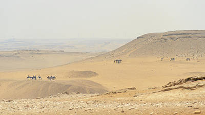 Poster featuring the photograph Desert by Silvia Bruno