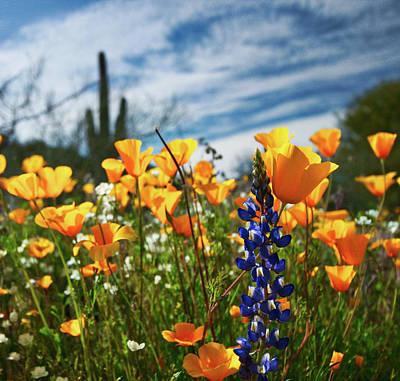 Desert Spring Poster