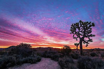 Desert Sunrise At Joshua Tree Poster