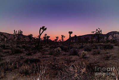 Desert Sunrise Joshua Tree National Park Poster by Timothy Kleszczewski