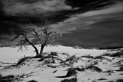 desert tree in White Sands bw Poster by Ralf Kaiser