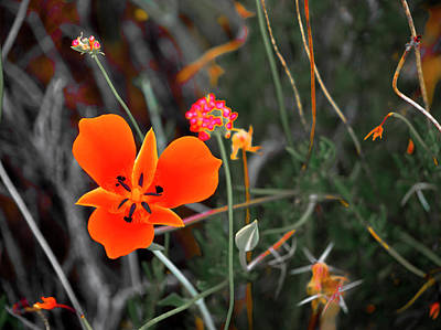 Desert Wildflowers Poster by Penny Lisowski