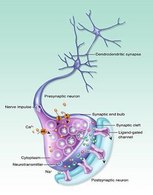 Detailed Neuron, Illustration Poster