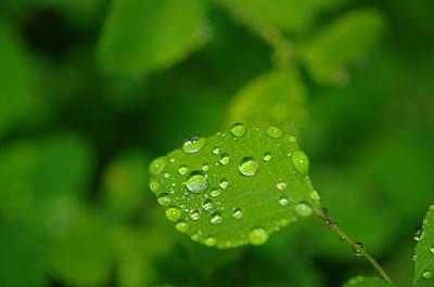 Dew Dappled Leaf Poster by Jeff Swan