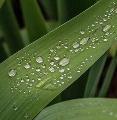 Dew Drops On Leaf Poster by Jean Noren