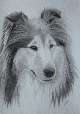 Diamond Rough Collie Poster