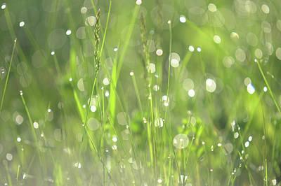 Diamond Sparkles. Green World Poster by Jenny Rainbow