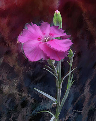 Dianthus In Love Poster