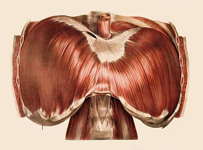 Diaphragm Poster by Mehau Kulyk
