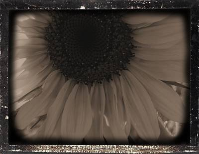 Diatrop Three Quarter Sunflower Poster