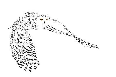 Digital Scribble - Snowy Owl II Poster by Nathan Shegrud