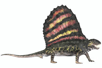 Dimetrodon Reptile From The Permian Poster by Corey Ford
