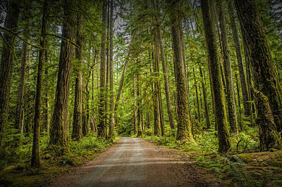 Dirt Road Through A Rain Forest On Vancouver Island Poster by Randall Nyhof