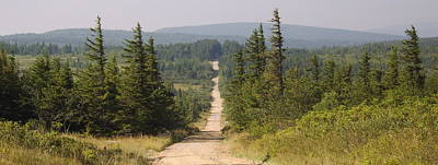 Dirt Road To Dolly Sods Poster