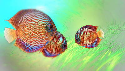 Discus In Eel Grass Poster by Russ Harris