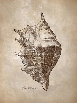 Poster featuring the drawing Distressed Antique Nautical Seashell 1  by Karen Whitworth