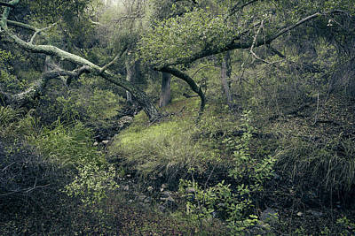 Poster featuring the photograph Ditch And Oaks by Alexander Kunz