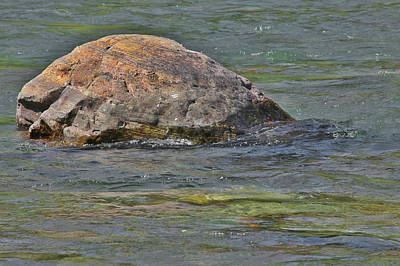 Diving Turtle Rock - Flathead River Middle Fork Mt Poster by Christine Till