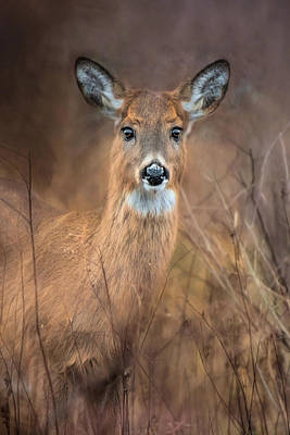 Poster featuring the photograph Doe A Deer by Robin-Lee Vieira