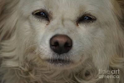 Dog 1 Poster by Padamvir Singh