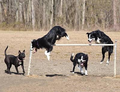Dog 380 Poster by Joyce StJames