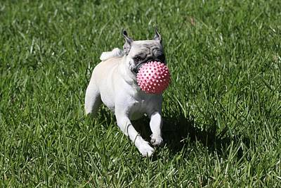 Dog And Ball Poster by FL collection