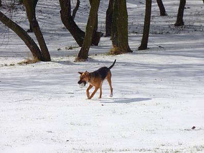 Dog And Winter Poster by Miroslav Nemecek