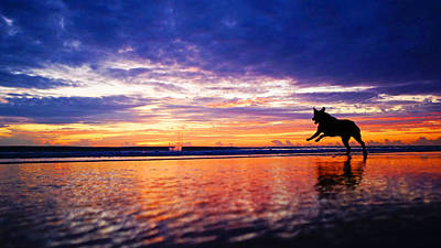 Dog Chasing Stick At Sunrise Poster