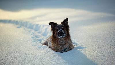 Dog Dog In Snow                   Poster