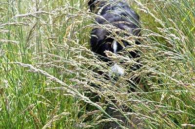Dog Hiding In The Grass Poster