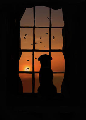 Dog In Window With Birds In Sunset Poster
