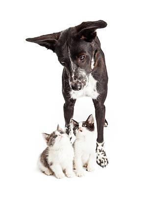 Dog Looking Down At Two Kittens Poster by Susan Schmitz