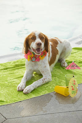 Dog Lying On Beach Towel Poster