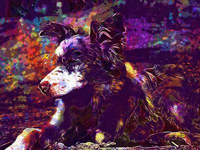 Dog Merle Blue Merle Collie Puppy  Poster