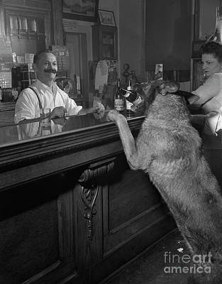 Dog Ordering A Beer Poster by The Harrington Collection