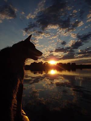 Dog Paddle Sunset Poster