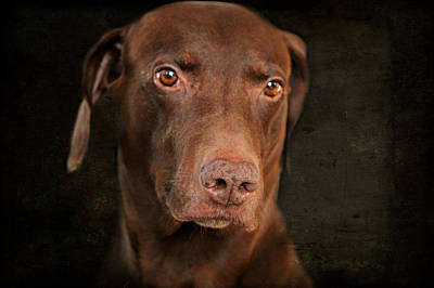 Dog Portrait Poster by Heike Hultsch