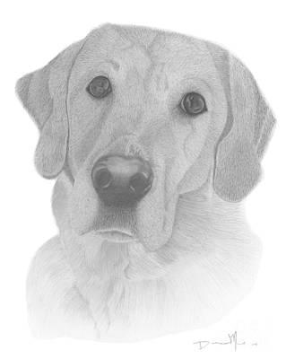 Dog Portrait Webster Poster