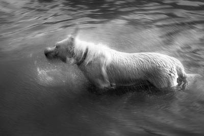 Dog Shake In Water Poster by Zoran Pucarevic