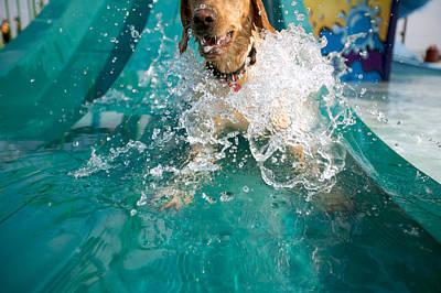 Dog Splashing In Water Poster