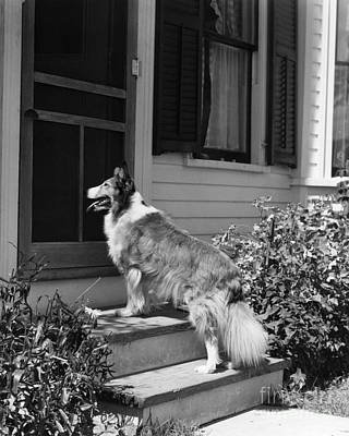 Dog Waiting To Be Let In To House Poster by H. Armstrong Roberts/ClassicStock
