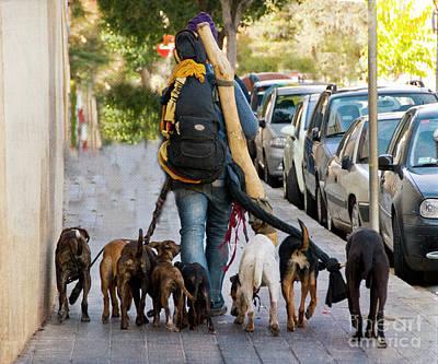 Dog Walker Poster by Juli Scalzi