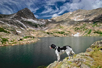 English Setter With A View Poster by Flying Z Photography By Zayne Diamond