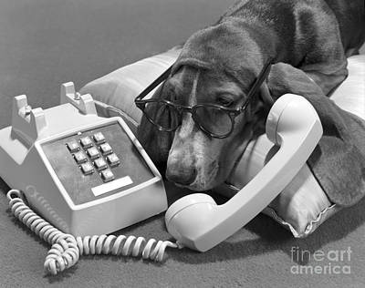 Dog With Eyeglasses And Telephone Poster by H. Armstrong Roberts/ClassicStock