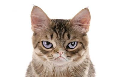 Doghouse Kitten Poster