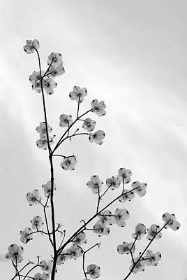 Dogwood Against The Sky Poster by Andy Puttbach
