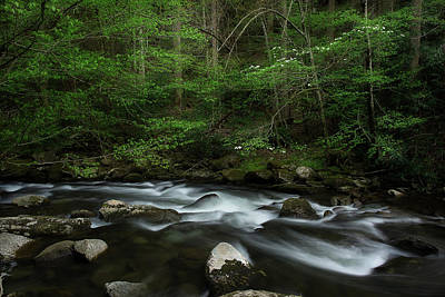 Poster featuring the photograph Dogwood Along The River by Mike Eingle