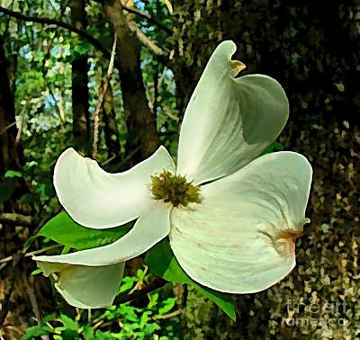 Dogwood Blossom II Poster by Julie Dant