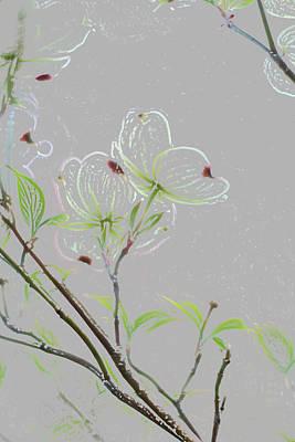 Dogwood Flowers Poster by Andrea Kappler
