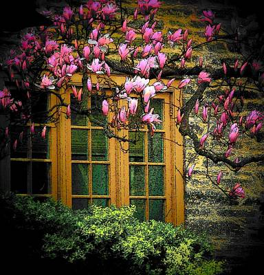 Dogwood In The Spring Poster by Joyce Kimble Smith